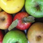 FIR_2_pommes