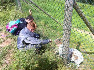 2 jeunes qui donnent à manger aux chèvres