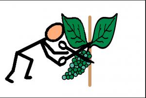couper le raisin