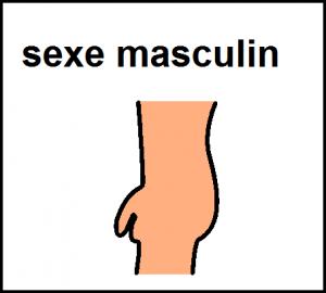 sexe masculin